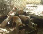 Estudian el sector agrícola matancero para generar políticas públicas
